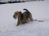 Snow_037